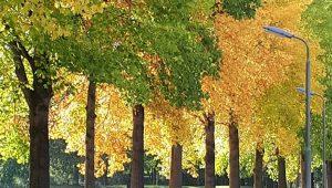 herfst in amersfoort